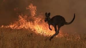 Help Feed Australia's Wild life